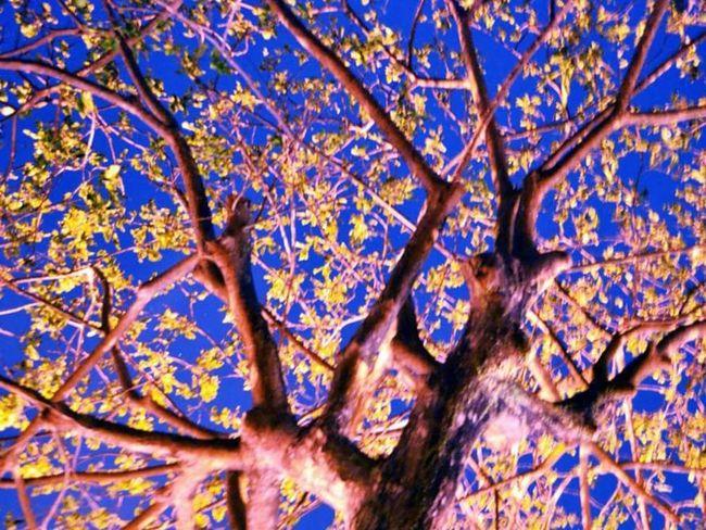 Plants 🌱 Landscape Nightphotography