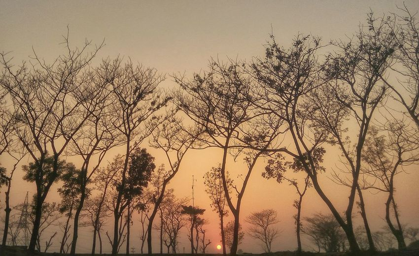 End of the day Mobile Mobile Photography Cellphone Photography Nature Nature Photography Naturelovers Landscape Landscape_photography Bangladesh 🇧🇩 Bangladeshiphotographer Sunset Low Angle View Outdoors No People Beauty In Nature Tree First Eyeem Photo