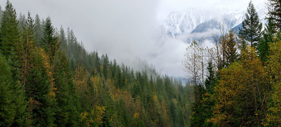 Massive mountains peak through the mist Alpine Autumn B.C. Beauty In Nature Canada Clouds Day Fog Forest Mist Mountain Mystical Nature No People Outdoors Rocky Mountains Scenics Selkirk Mountains Sky Snow Tree