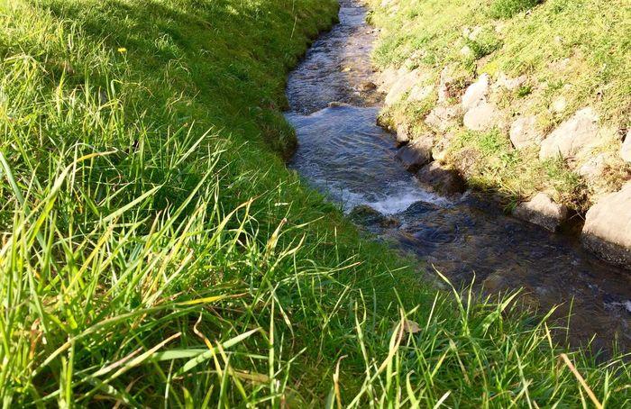 Water Nature Stream