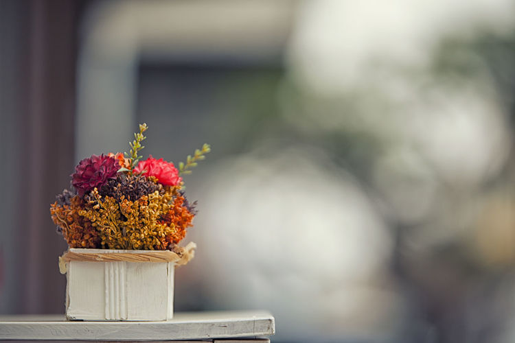 Flower Flowering Plant Freshness Plant Focus On Foreground No People Nature Beauty In Nature Day Close-up Vulnerability  Fragility Outdoors Wall - Building Feature Flower Head Still Life Selective Focus Potted Plant Wood - Material Growth Flower Arrangement Bouquet