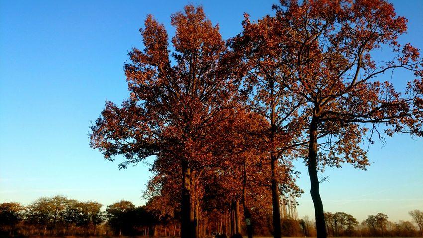 Autumn EyeEm Nature Lover Trees Beautiful Nature