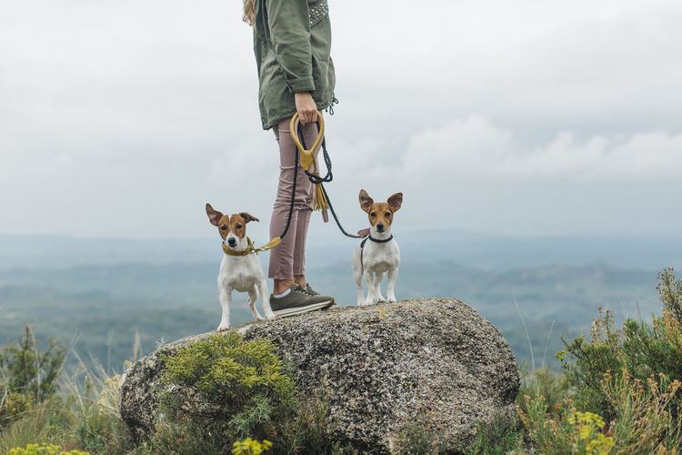 Low section of person with dog standing against sky