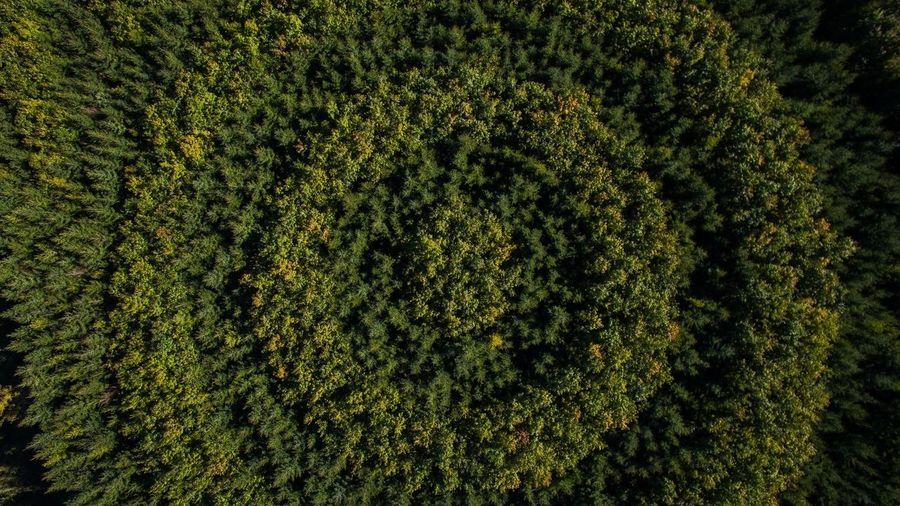 Full frame shot of topiary
