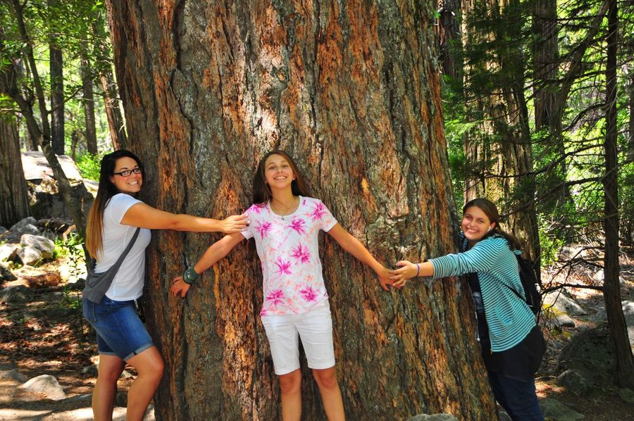 Three girls hug tree Women Togetherness Happiness Child Smiling Girls Summer Road Tripping Family Emotion Childhood Females Leisure Activity Group Of People Positive Emotion Sister Standing Sibling Tree Casual Clothing Fun Outdoors