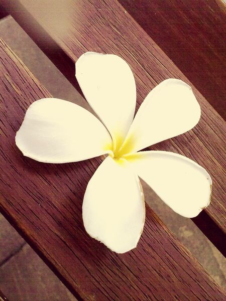 Fallen Flower Mui Ne Phan Thiet Vietnam June 2012 Summer Time  Relaxing Deceptively Simple