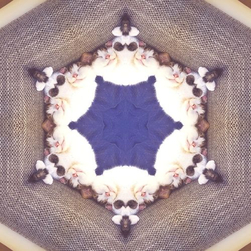 Indoors  No People Close-up Animal Themes Day Cat Caleidoscope