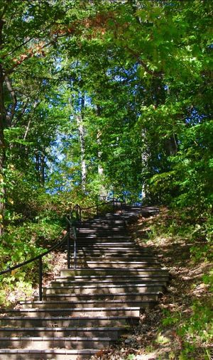 Tranquil Scene The Way Forward And Up... Outdoors Steps Trees Scenics No People