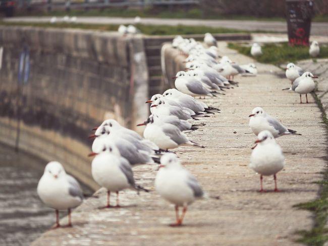Hotspot. Vienna (Austria). Canal Gull Donau Bird Animal Themes Animals In The Wild Large Group Of Animals Animal Wildlife Day Outdoors Nature