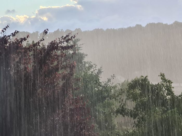 Panoramic shot of raindrops on trees against sky