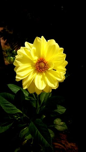 Flower Yellow Petal Fragility Flower Head Nature Plant Freshness Growth Beauty In Nature Close-up Day No People Outdoors Leaf EyeEmNewHere
