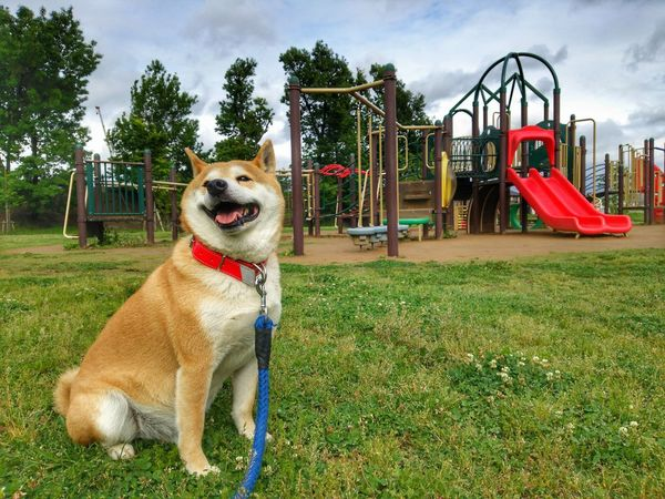 partner🌟🐶🐶🌟dog🌠Lan EyeEm Gallery EyeEm Selects Grass Jungle Gym Outdoor Play Equipment Merry-go-round Slide - Play Equipment Park - Man Made Space Dog Slide Swing