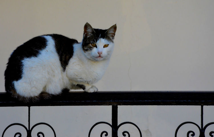 Cat On Fence Cat♡ Day Looking At Camera One Animal Pets Portrait Qute Animals