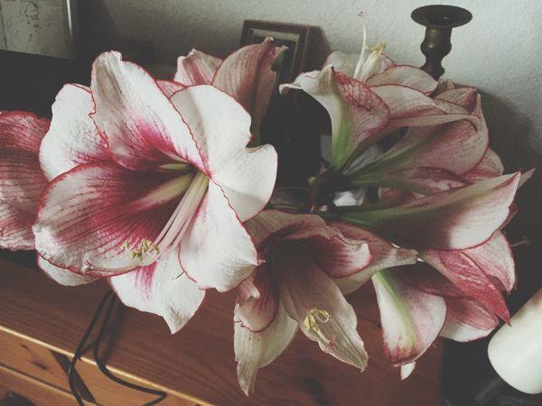 Flowers Make Me Smile!😜