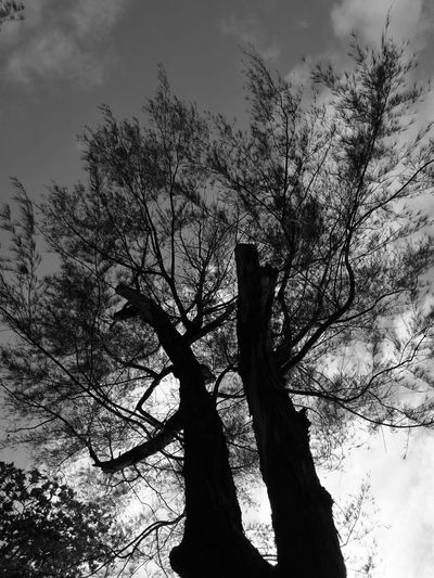TIME Low Angle View Tree Tree Trunk Branch Sky Silhouette Tranquility Bare Tree Tranquil Scene Scenics Nature Growth Tall - High Day Outdoors Beauty In Nature Tall Non-urban Scene No People Cloud - Sky First Eyeem Photo