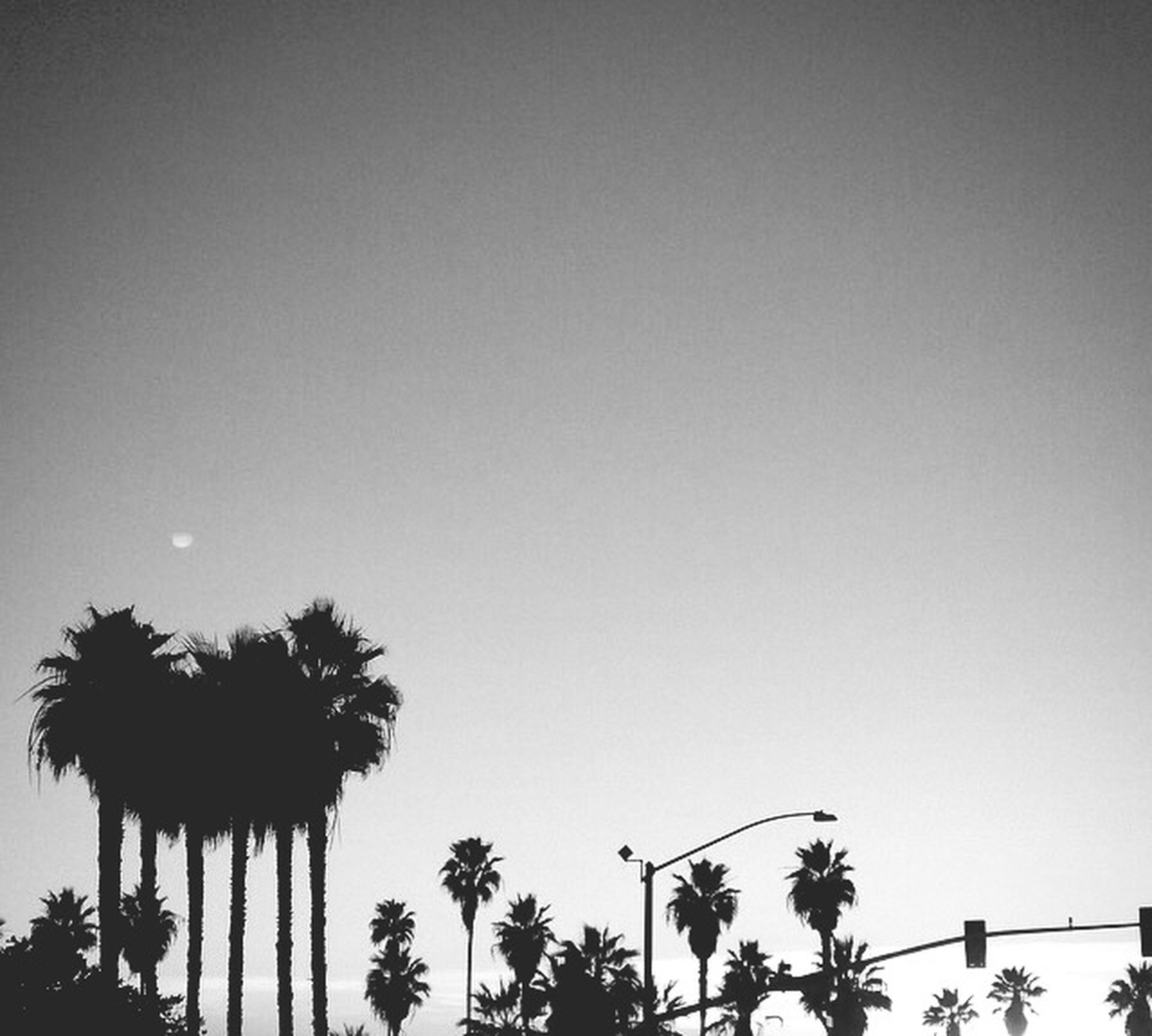 palm tree, low angle view, clear sky, tree, copy space, silhouette, growth, nature, sky, beauty in nature, street light, tranquility, high section, outdoors, no people, dusk, branch, sunset, lighting equipment, scenics