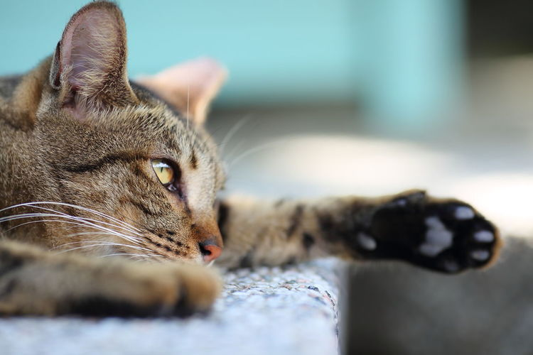 Close-Up Of Cat Resting On Retaining Wall