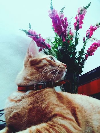 Pets Flower Indoors  Lodvieliz Lazy Cat One Animal Taking Photos Vietnam Its Me