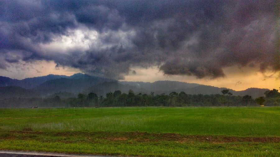 Agriculture Field Nature Rural Scene Food Growth Freshness Beauty In Nature Outdoors Mountain Landscape No People Scenics Irrigation Equipment Tree Tranquility Malaysia Truly Asia ASIA Dramatic Sky Beauty In Nature Rice Paddy Sky Tea Crop Day EyeEm Ready   EyeEmNewHere