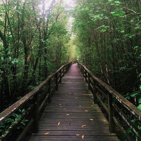 EyeEm Best Edits EyeEmNewHere EyeEm Nature Lover EyeEm Best Shots Tree The Way Forward Nature Forest Railing Growth Tranquility Outdoors Beauty In Nature Tranquil Scene Wood - Material Bamboo - Plant No People Scenics Day Bamboo Grove Footbridge EyeEmNewHere