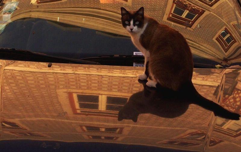 Cat in Lisbonne Cat Looking At Camera Feline