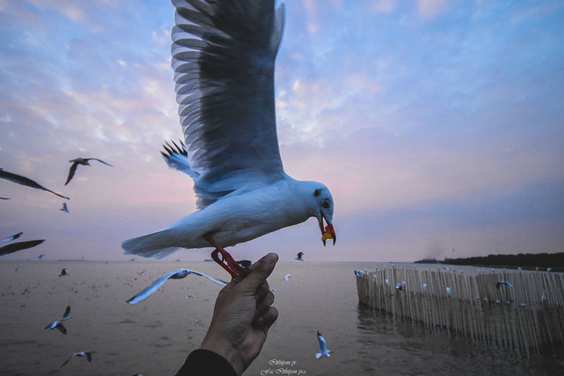 Bird Animal Wildlife Animals In The Wild Vertebrate Human Hand Hand Sky Flying Real People Seagull One Person Human Body Part Spread Wings Group Of Animals Nature Feeding  Lifestyles Body Part Outdoors Finger