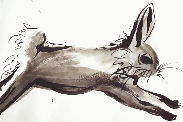 Animal_collection Lifestylephotography Artsy Photography Artphoto Rabbits Lifestyle Animal Love Artistic Asian Beauty Rabbit Animal Hair Animals Art Animal Photography Rabbit ❤️ Talent_alert Cuteness Today :) ArtInMyLife Asian  Animal Portrait Hello World ✌ Outdoors Hello World Cute