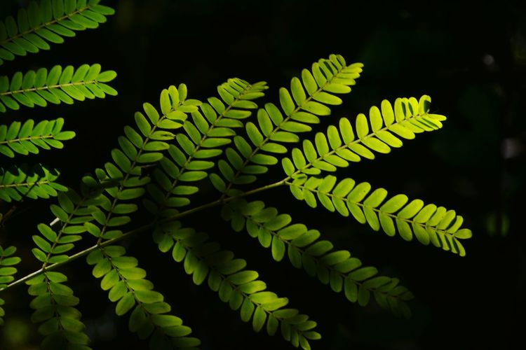 Close-up of fern leaf