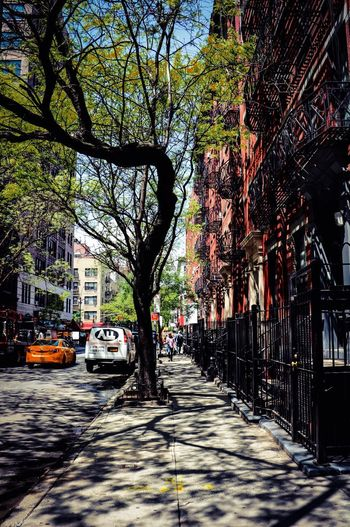New York City New York Tree Architecture City Built Structure Street Building Road Outdoors No People Shadow Day Car