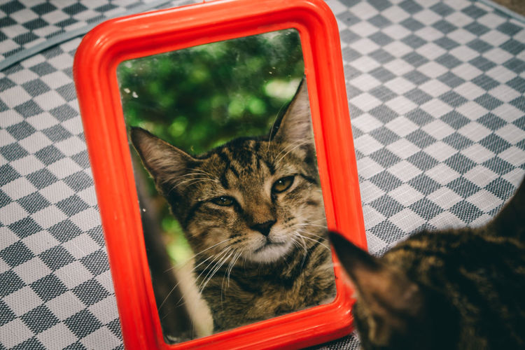 Cat Kitten Cute Mirror Thinking Thoughtful Persian Cat  Siamese Cat Ginger Cat Maine Coon Cat Tabby Stray Animal Yellow Eyes Pet Clothing Tabby Cat Carnivora At Home Young Animal Vehicle Mirror Tortoiseshell Cat Domestic Animals Pet Bed Sleepy Whisker Home Canine Mammal Animal Eye