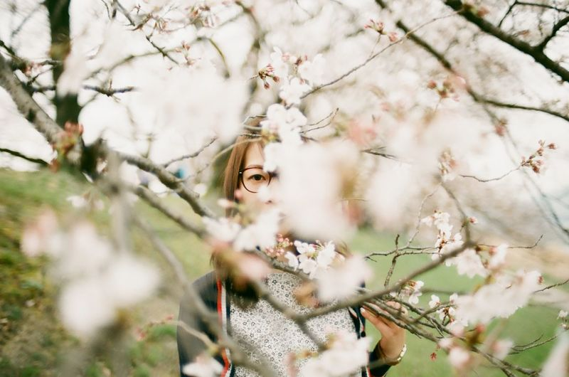 Asian Girl Beauty In Nature Believeinfilm Blossom Branch Cherry Blossom Close-up Film Photography Filmisnotdead Flower Fragility Growth Nature The Portraitist - 2016 EyeEm Awards Tree Twig Natural Light Portrait Ultimate Japan Focus Object