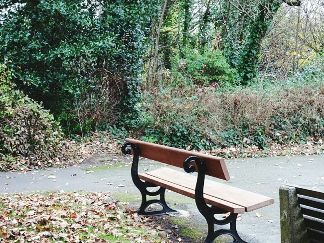 Bench Tree Nature No People Plant Day Growth Outdoors Seat Beauty In Nature Parklife Autumn Tranquil Scene