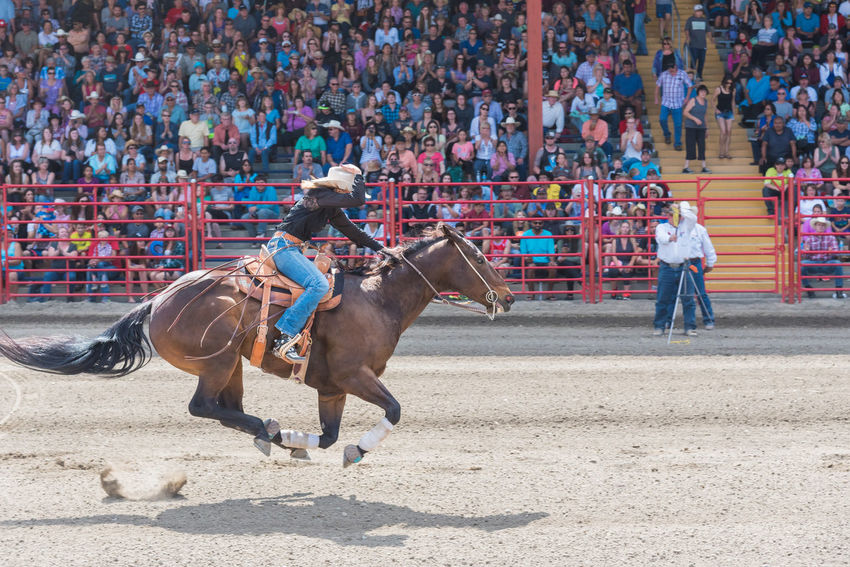 Williams Lake, British Columbia/Canada - July 2, 2016: horse and rider race to the finish line at a barrel racing competition during the 90th Williams Lake Stampede. 90th Williams Lake Stampede Arena Canadian Professional Rodeo Association Gallop Horse And Rider Rodeo Travel Woman Airborne Audience Barrel Racing Competition Cowgirl Documentary Editorial  Extreme Sport Flying Galloping Horse Mid-air People Professional Rodeo Stampede Stampede Grounds Stands