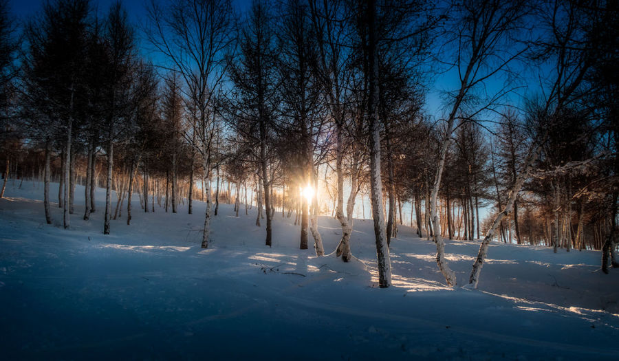 Light through Trees snow Mountains winter Snow Winter Blue Beijing, China Perspective Landscape Snow ❄ Countryside Sunset