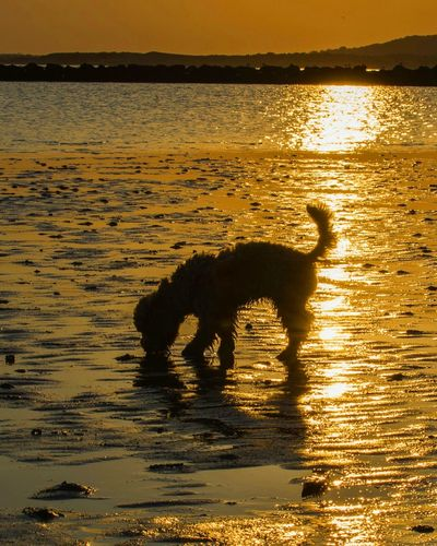 Domestic Animals Animal Themes One Animal Dog Pets Sunset Mammal Water Beach Sunlight Nature Tranquility Sea Loyalty Rippled Tranquil Scene Scenics Outdoors Animal Zoology