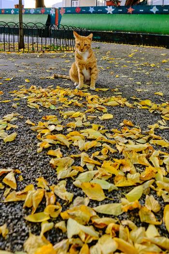 Cat lying on leaves