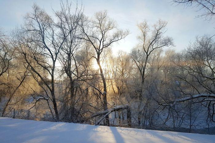 Мороз и солнце утро зима остафьево Frosty Morning Frost Winter Sunlight Trees Moscow Podolsk