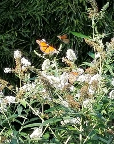High angle view of butterfly pollinating on flower