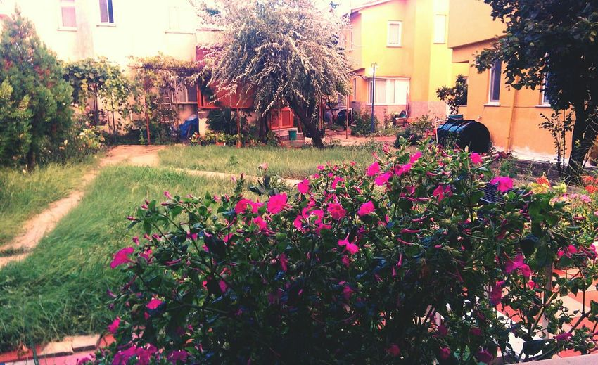 Flowers Nature Relaxing Onholiday Throwback Landscape Quite Place Miss