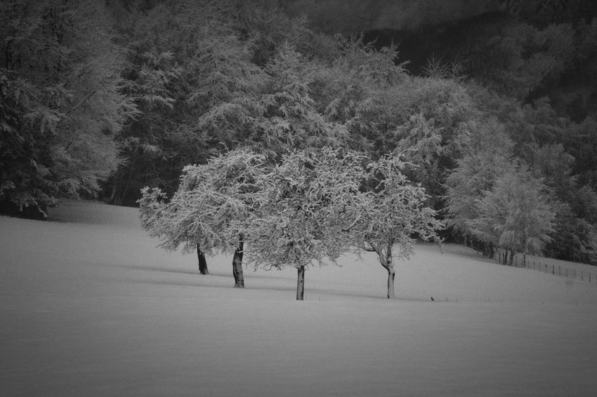 Beautiful Oberberg Tree Trees Winter Wintertime Beauty In Nature Beauty In Nature Bergneustadt Cold Temperature Day Germany Landscape Nature No People Outdoors Snow White Winter Winter Trees Winter Wonderland