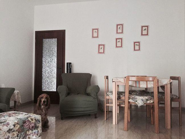 Indoors  Sofa Dog Minimal Green Brown White
