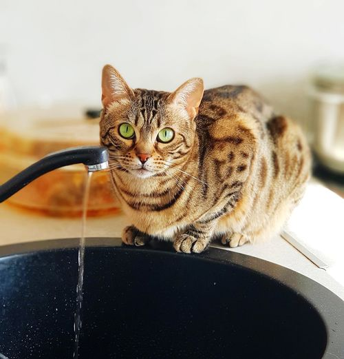 Portrait of tabby cat sitting