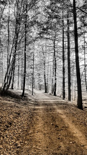 Abstract Brown And Grey Tree Nature The Way Forward Tranquility Scenics Outdoors Beauty In Nature Landscape Forest No People Tranquil Scene