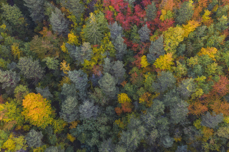 Aerial view of a multi colored forest in a autumn day. Autumn Colors Drone  Drone Shot Drooling EyeEmNewHere Madness Morning Romania Aerial Aerial Photography Aerial View Beauty In Nature Color Day Drone Photography Fall Lake Land Multi Colored Nature No People Outdoors Plant Tree