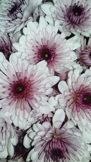 Flowers Love ♥
