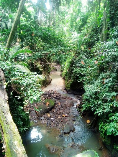 Monkey Forest Nature Outdoors Beauty In Nature Water Ubud, Bali Ubud Nature Monkey Forest Godgiven