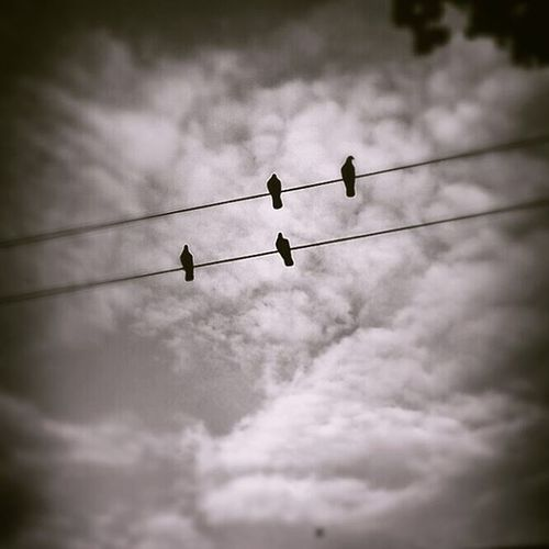My new band Phoneography Soullessphotography Instagram Cambie Crows Birdsonwires EyeEm