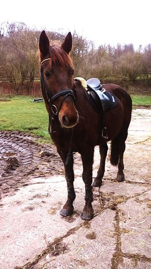 ❤ Training Horse Irish Horse One And Only Miles Love