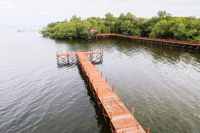 Mangrove Forest Borneo Concervation Habitat Mangrove Forest Mangrove Tour Shrub Small Tree