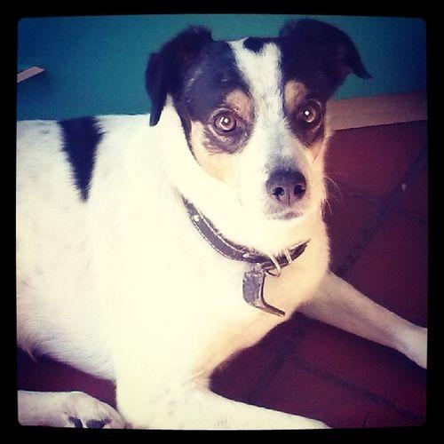 C'ha lo sguardo troppo sveglio, sarà sicuro un'insolazione. Dog Dogoftheday Dogfriendly Puppy woof insta_dog_lover picoftheday photooftheday igersAbruzzo Ilovemydog